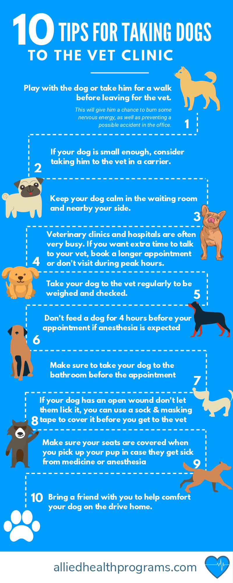 Top 10 Tips for Taking Your Dog to the Veterinarian