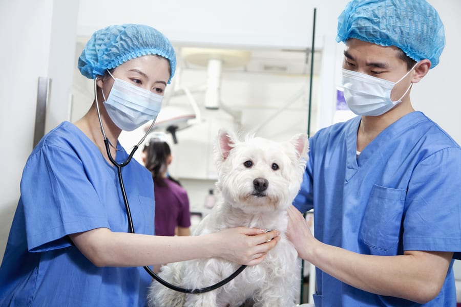 Vet Tech Job Description: What Is a Veterinary Technician?